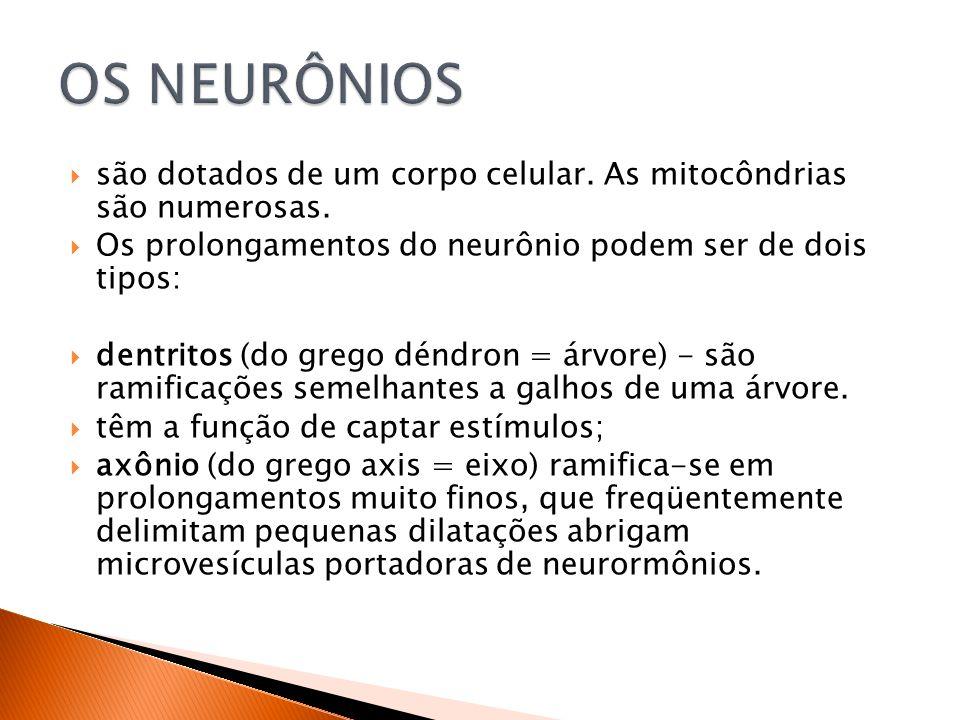 são dotados de um corpo celular.As mitocôndrias são numerosas.