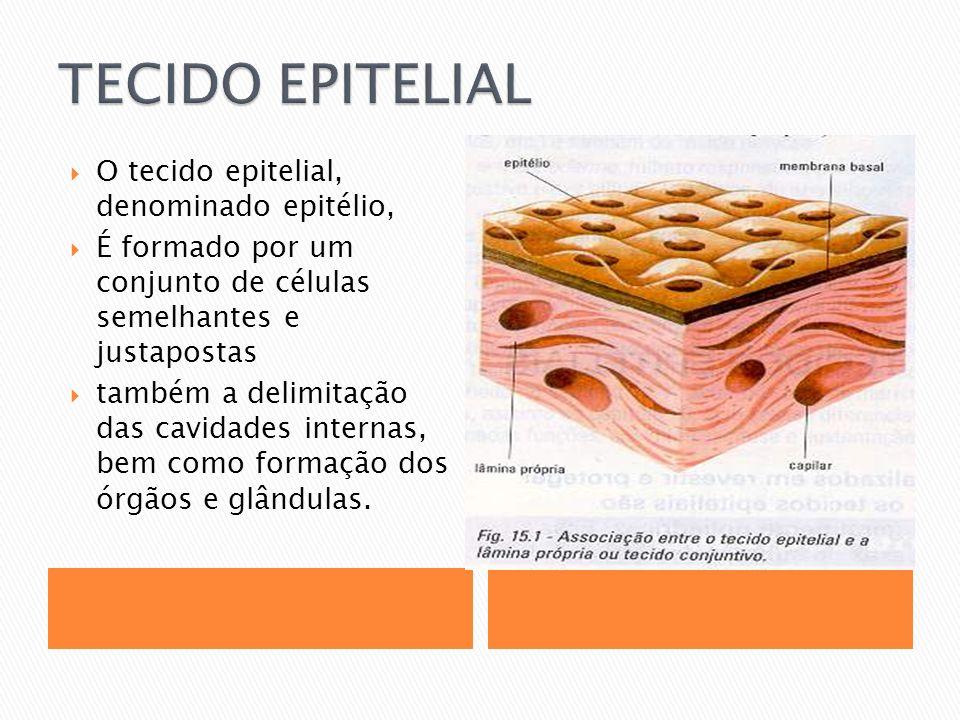 O tecido epitelial, denominado epitélio, É formado por um conjunto de células semelhantes e justapostas também a delimitação das cavidades internas, bem como formação dos órgãos e glândulas.