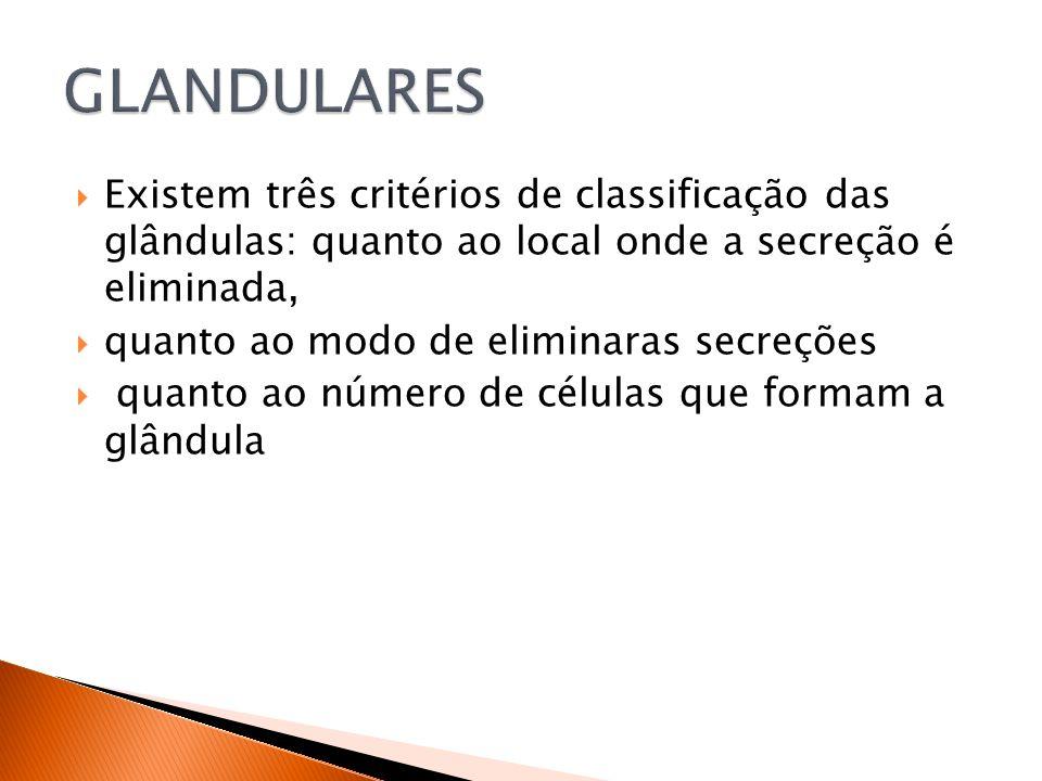 Existem três critérios de classificação das glândulas: quanto ao local onde a secreção é eliminada, quanto ao modo de eliminaras secreções quanto ao número de células que formam a glândula