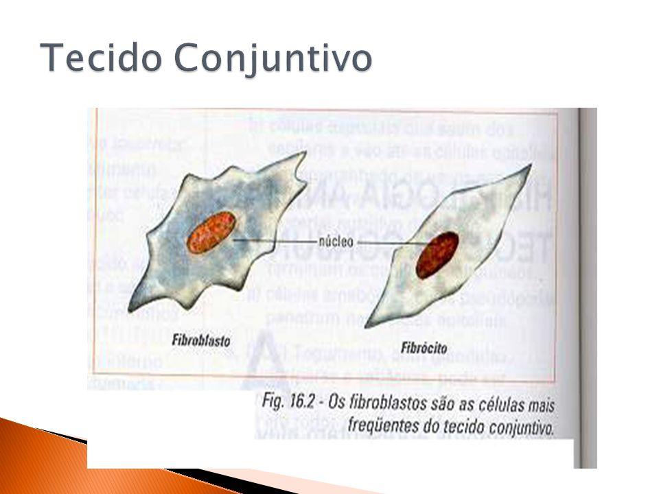 O tecido sanguíneo - ou simplesmente sangue - é constituído por uma parte líquida denominada plasma.