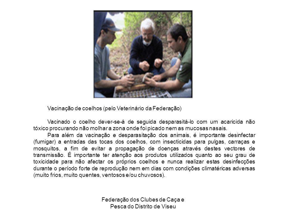 Federação dos Clubes de Caça e Pesca do Distrito de Viseu Vacinação de coelhos (pelo Veterinário da Federação) Vacinado o coelho dever-se-á de seguida