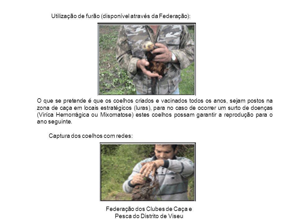 Federação dos Clubes de Caça e Pesca do Distrito de Viseu Utilização de furão (disponível através da Federação): O que se pretende é que os coelhos cr