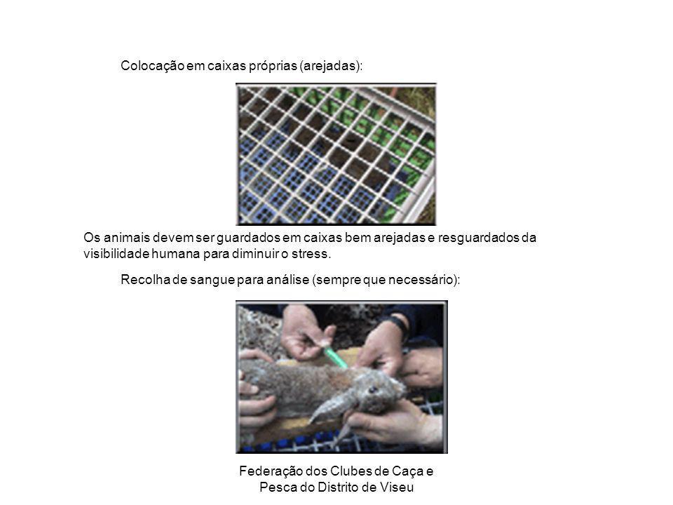 Federação dos Clubes de Caça e Pesca do Distrito de Viseu Colocação em caixas próprias (arejadas): Os animais devem ser guardados em caixas bem arejad
