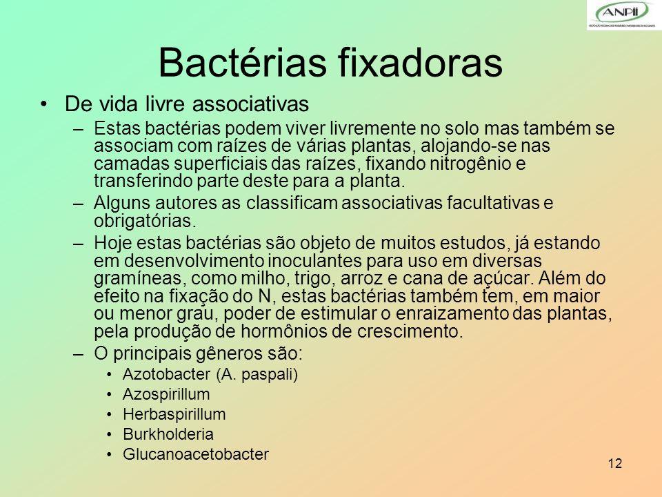 12 De vida livre associativas –Estas bactérias podem viver livremente no solo mas também se associam com raízes de várias plantas, alojando-se nas cam
