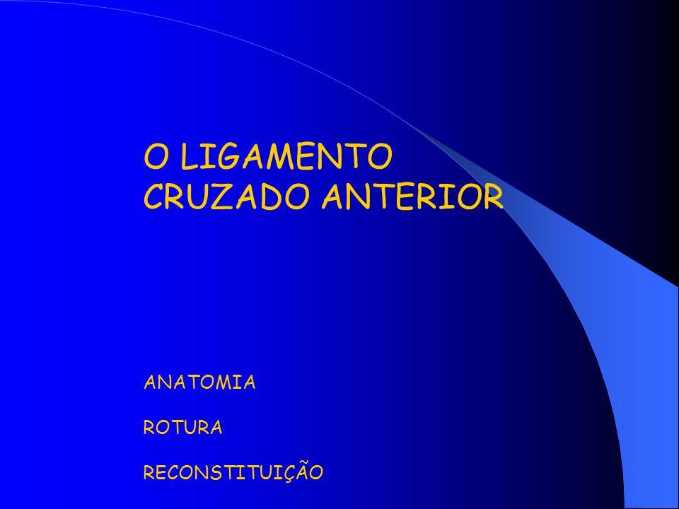 O LIGAMENTO CRUZADO ANTERIOR ANATOMIA ROTURA RECONSTITUIÇÃO
