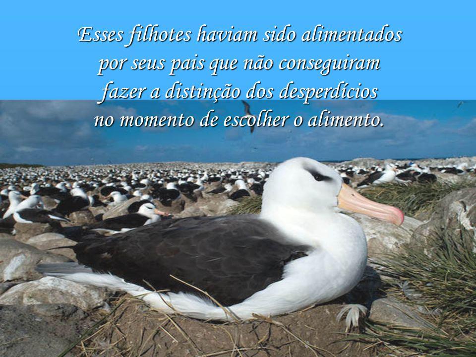 Quando começou a recolher o conteúdo do estômago de oito filhotes de albatrozes mortos, encontrou: 42 tampinhas plásticas de garrafa, 18 acendedores e