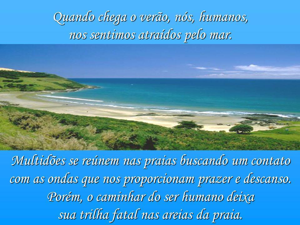 Quando chega o verão, nós, humanos, nos sentimos atraídos pelo mar.