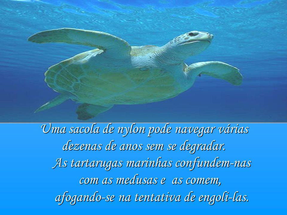 As tartarugas marinhas confundem-nas com as medusas e as comem, com as medusas e as comem, afogando-se na tentativa de engoli-las.
