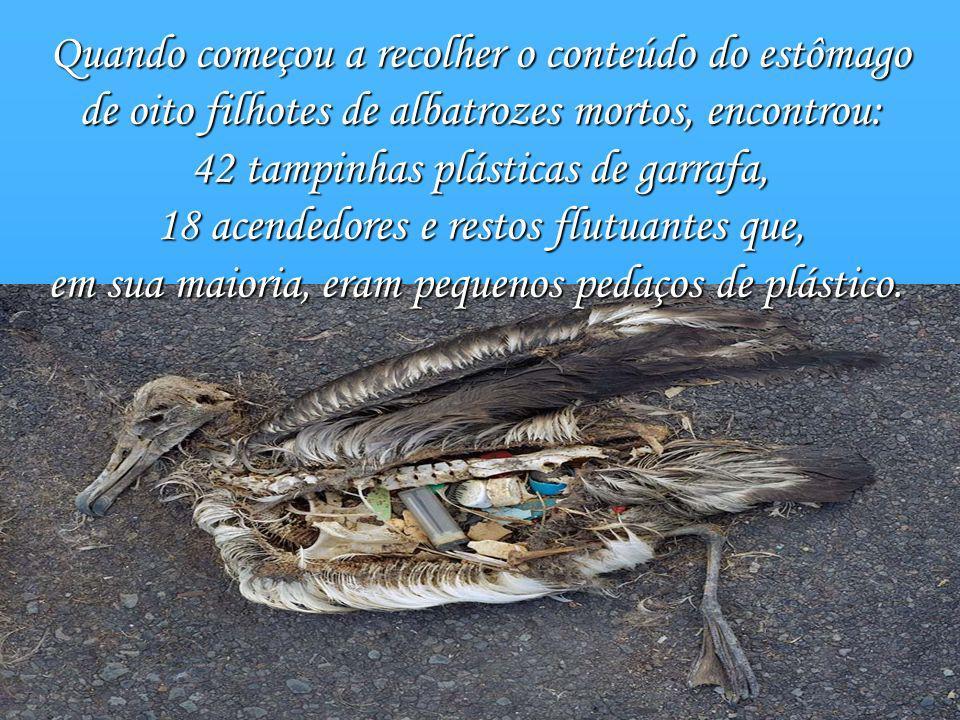 Quando começou a recolher o conteúdo do estômago de oito filhotes de albatrozes mortos, encontrou: 42 tampinhas plásticas de garrafa, 18 acendedores e restos flutuantes que, em sua maioria, eram pequenos pedaços de plástico.