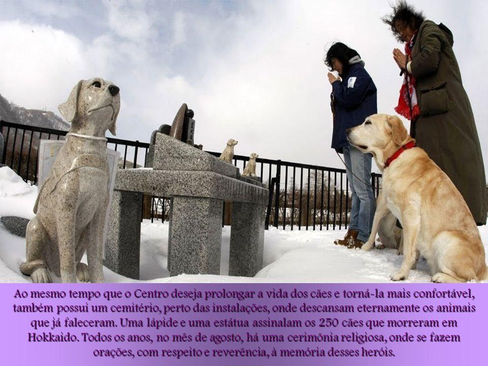 Os cães reformados são tratados, limpos, escovados, alimentados, e praticam exercício físico diariamente. Para facilitar o movimento dos cães com fraq