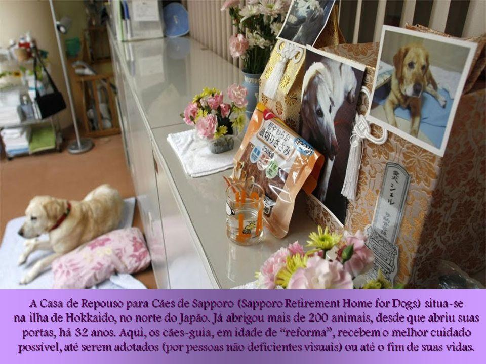 Esta é a última dádiva que podemos oferecer a esses cães, que trabalharam para as pessoas durante toda sua vida, diz Keiko Tsuji, a diretora deste Lar