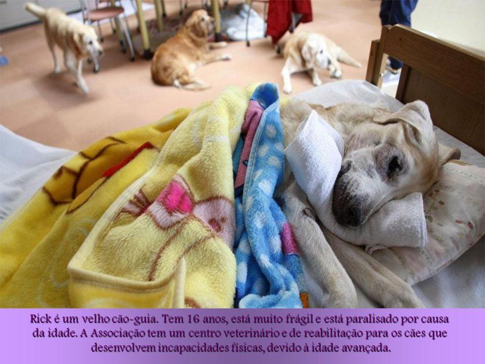 Só alguns cães vivem permanentemente no Centro. Uma parte deles volta para o lar que os criou, quando ainda eram filhotes. Outros são adotados por emp