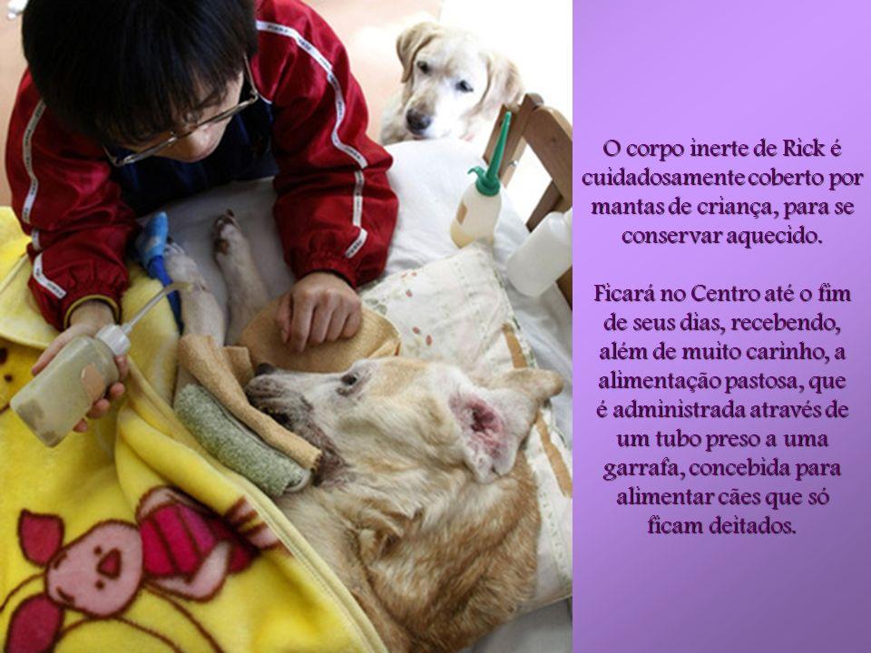 Rick é um velho cão-guia. Tem 16 anos, está muito frágil e está paralisado por causa da idade. A Associação tem um centro veterinário e de reabilitaçã