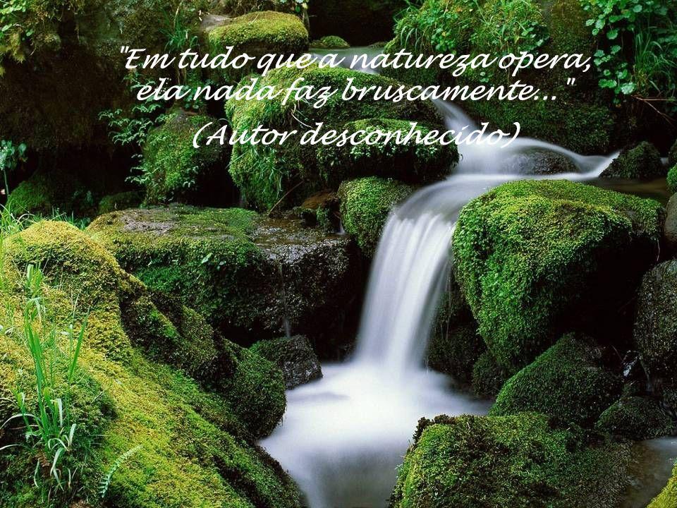 Em tudo que a natureza opera, ela nada faz bruscamente... (Autor desconhecido)