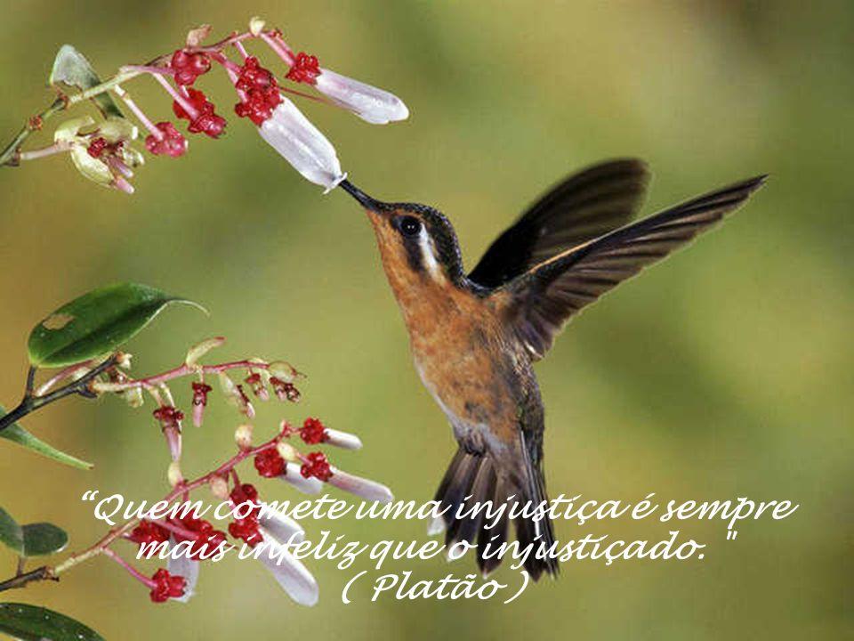 Quem comete uma injustiça é sempre mais infeliz que o injustiçado. ( Platão )