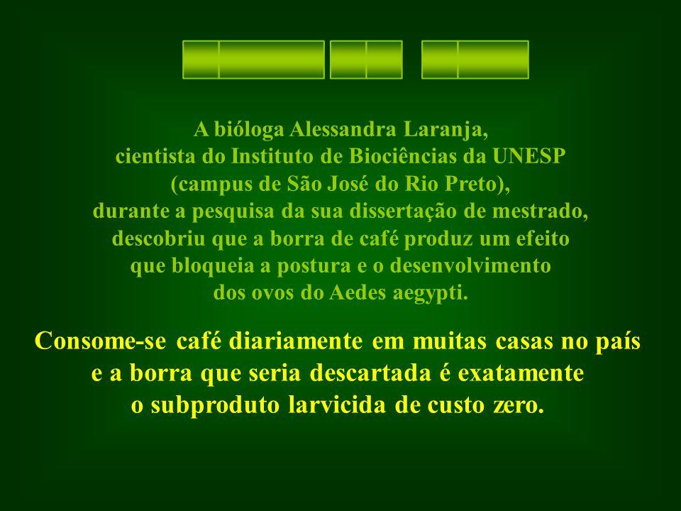 A bióloga Alessandra Laranja, cientista do Instituto de Biociências da UNESP (campus de São José do Rio Preto), durante a pesquisa da sua dissertação de mestrado, descobriu que a borra de café produz um efeito que bloqueia a postura e o desenvolvimento dos ovos do Aedes aegypti.