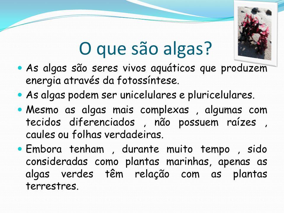 O que são algas? As algas são seres vivos aquáticos que produzem energia através da fotossíntese. As algas podem ser unicelulares e pluricelulares. Me