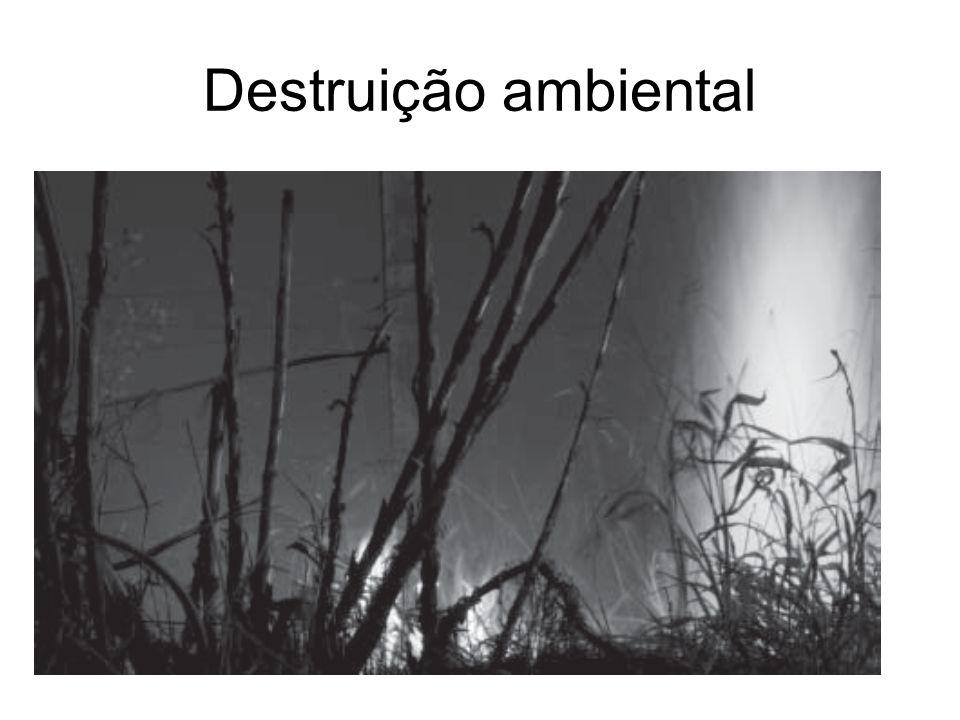 Destruição ambiental