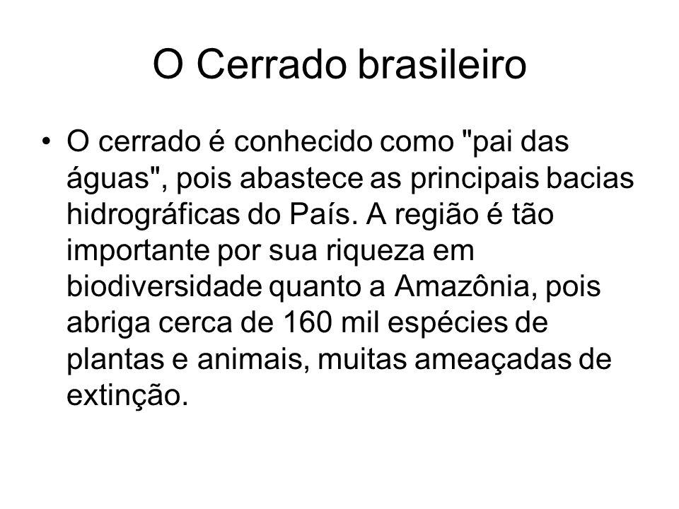 O Cerrado brasileiro O cerrado é conhecido como
