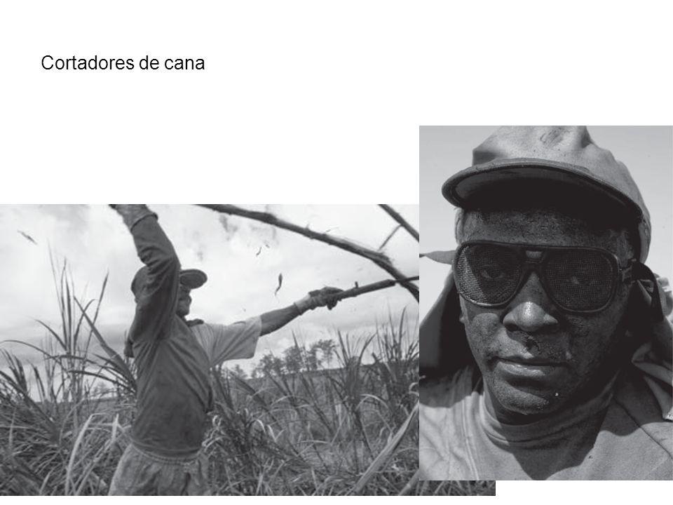 Cortadores de cana
