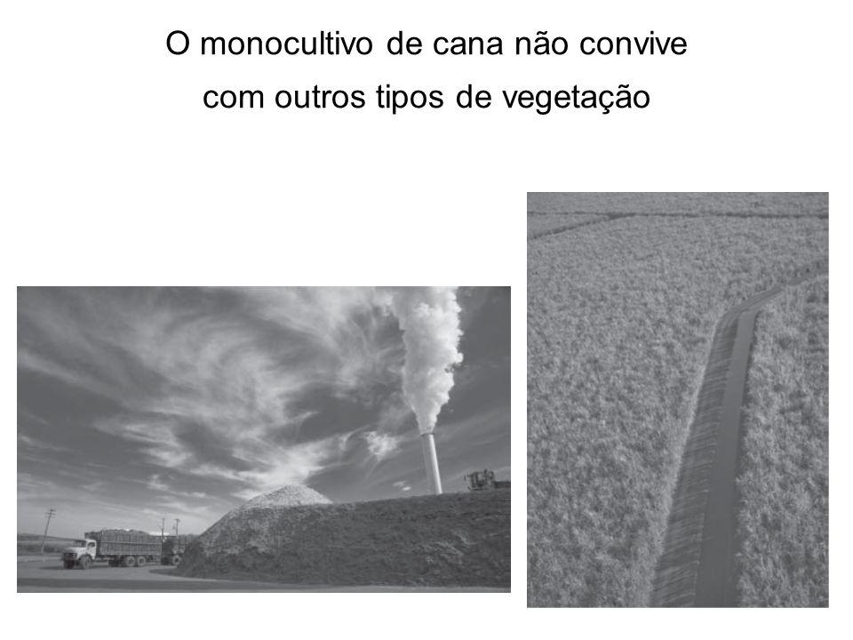 O monocultivo de cana não convive com outros tipos de vegetação