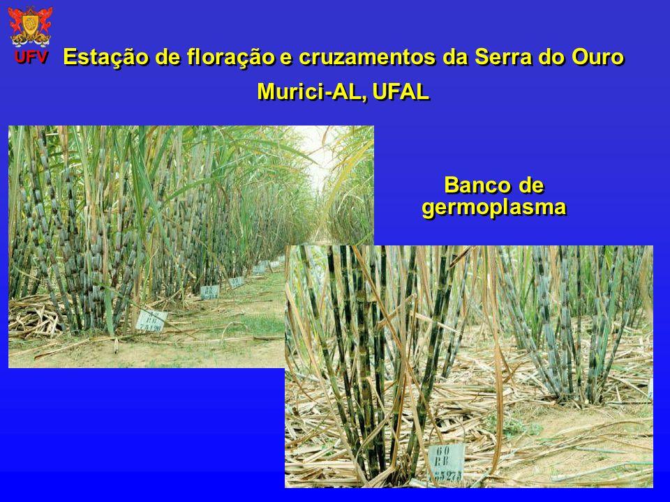 Banco de germoplasma Estação de floração e cruzamentos da Serra do Ouro Murici-AL, UFAL Estação de floração e cruzamentos da Serra do Ouro Murici-AL,