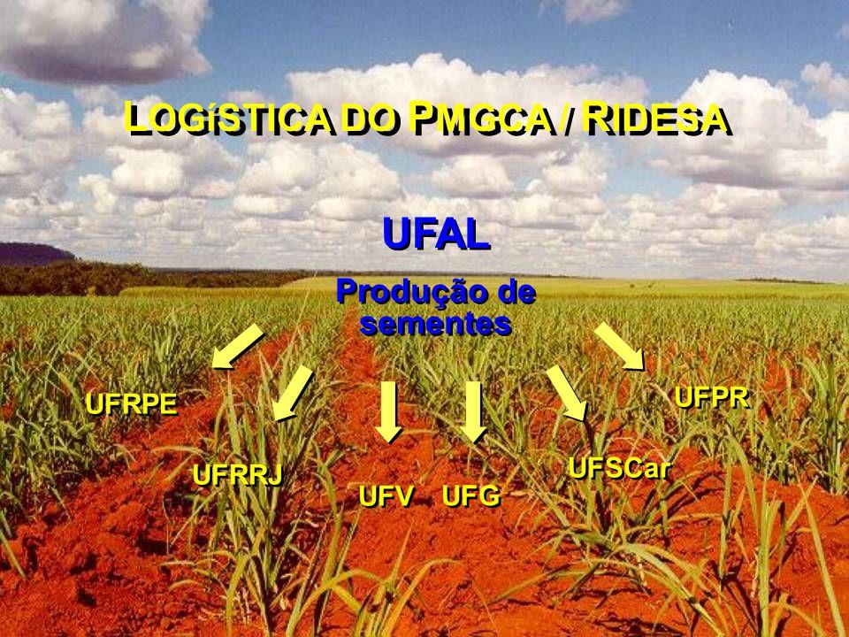 UFAL Produção de sementes UFAL Produção de sementes UFRRJ UFV UFSCar UFRPE UFPR UFG L OGíSTICA DO P MGCA / R IDESA