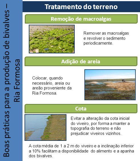Boas práticas para a produção de bivalves – Ria Formosa Tratamento do terreno Remoção de macroalgas Adição de areia Cota Remover as macroalgas e revol