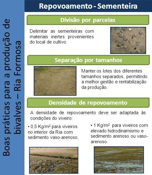 Boas práticas para a produção de bivalves – Ria Formosa Divisão por parcelas Delimitar as sementeiras com materiais inertes provenientes do local de c