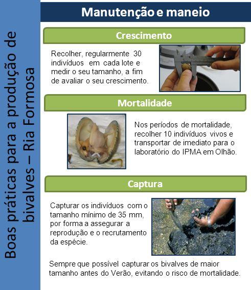 Boas práticas para a produção de bivalves – Ria Formosa Captura Mortalidade Crescimento Recolher, regularmente 30 indivíduos em cada lote e medir o se