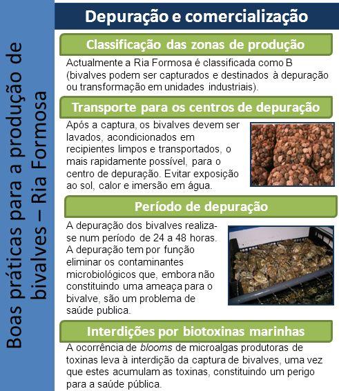 Boas práticas para a produção de bivalves – Ria Formosa Depuração e comercialização Classificação das zonas de produção Transporte para os centros de