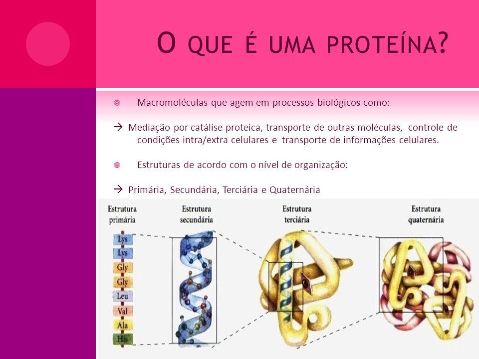 O QUE É UMA PROTEÍNA ? Macromoléculas que agem em processos biológicos como: Mediação por catálise proteica, transporte de outras moléculas, controle