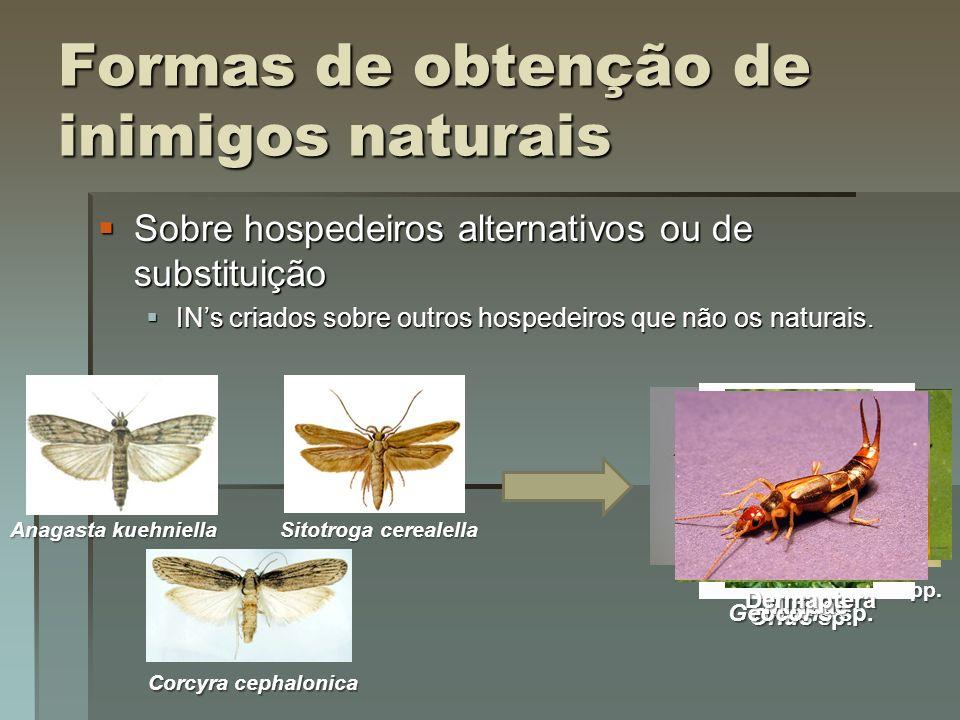 Esquema de criação de Trichogramma spp. em hospedeiro alternativo (Parra, 1997)