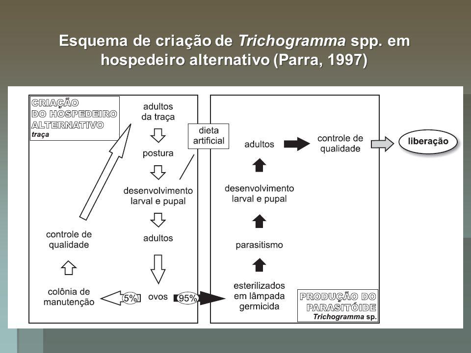 Formas de obtenção de inimigos naturais Em meios artificiais (in vitro) Em meios artificiais (in vitro) Trichogramma spp.