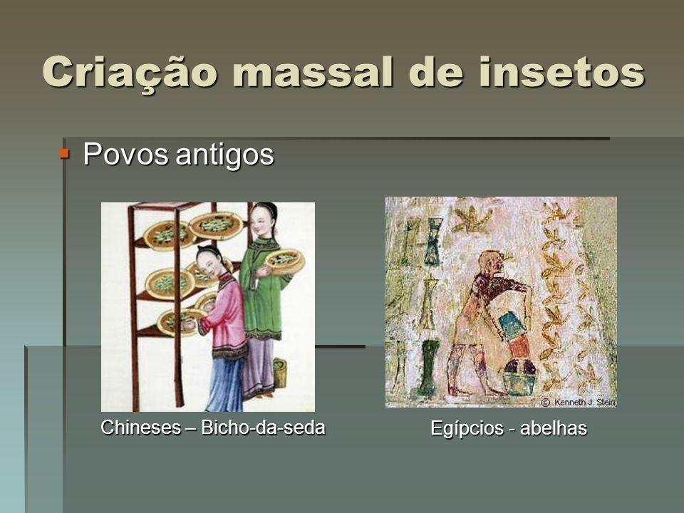 Criação massal de insetos Século XX Século XX Drosophila spp.