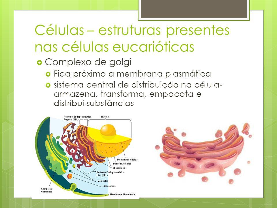 Complexo de golgi Fica próximo a membrana plasmática sistema central de distribuição na célula- armazena, transforma, empacota e distribui substâncias