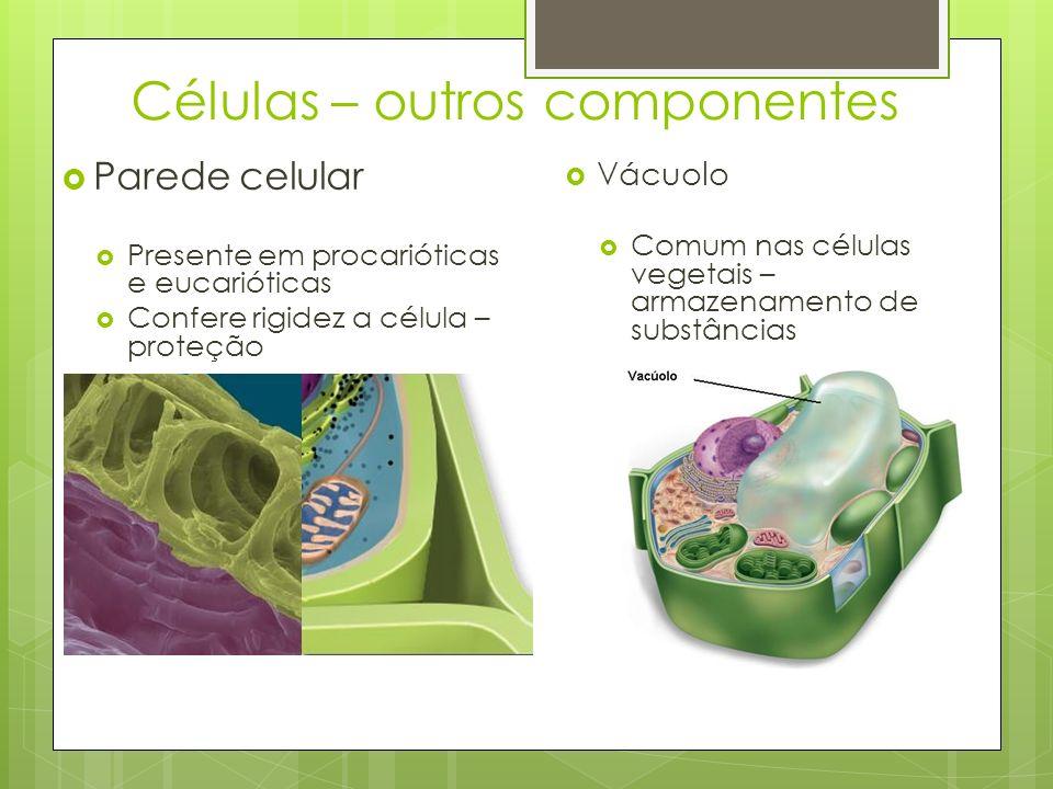 Células – outros componentes Parede celular Presente em procarióticas e eucarióticas Confere rigidez a célula – proteção Vácuolo Comum nas células veg