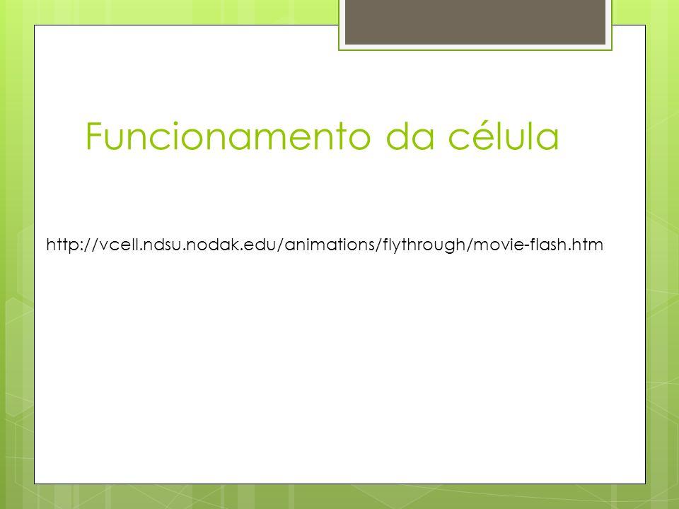 Funcionamento da célula http://vcell.ndsu.nodak.edu/animations/flythrough/movie-flash.htm