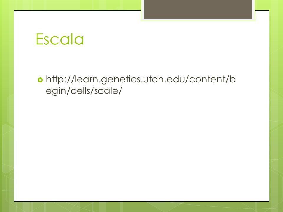 Escala http://learn.genetics.utah.edu/content/b egin/cells/scale/