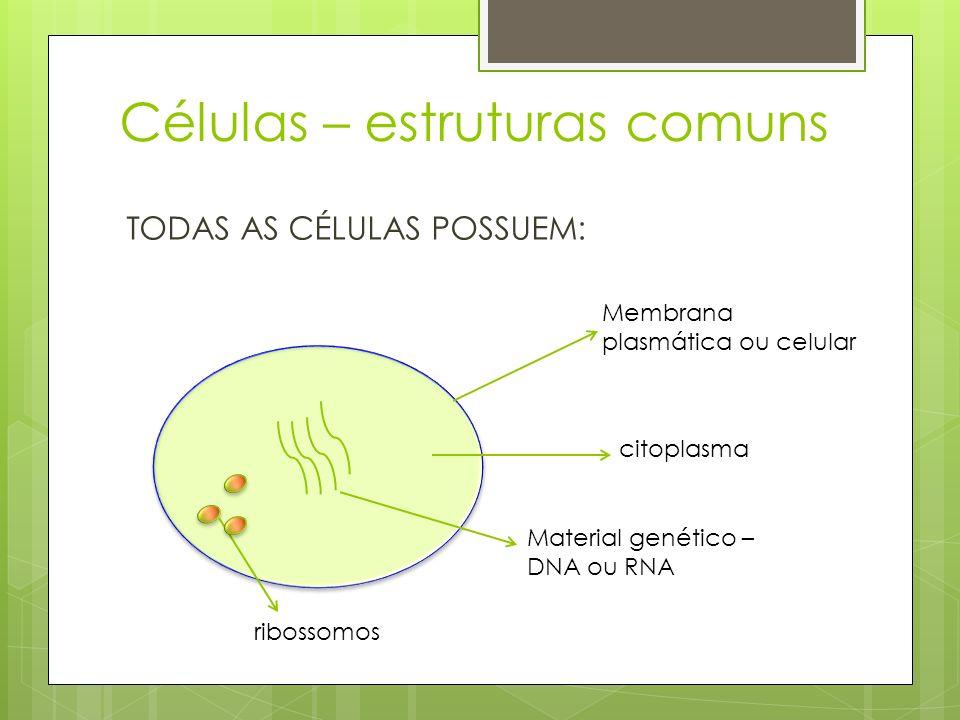 Células – estruturas comuns TODAS AS CÉLULAS POSSUEM: Membrana plasmática ou celular citoplasma Material genético – DNA ou RNA ribossomos