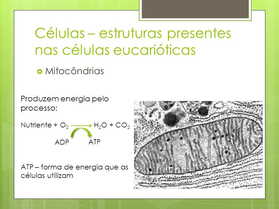Mitocôndrias Células – estruturas presentes nas células eucarióticas Produzem energia pelo processo: Nutriente + O 2 H 2 O + CO 2 ATP – forma de energ