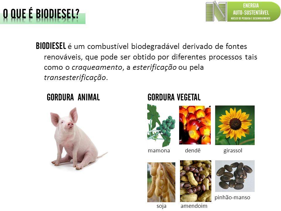 BIODIESEL é um combustível biodegradável derivado de fontes renováveis, que pode ser obtido por diferentes processos tais como o craqueamento, a ester