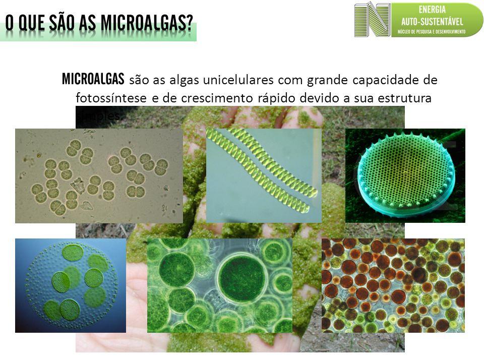 MICROALGAS são as algas unicelulares com grande capacidade de fotossíntese e de crescimento rápido devido a sua estrutura simples.