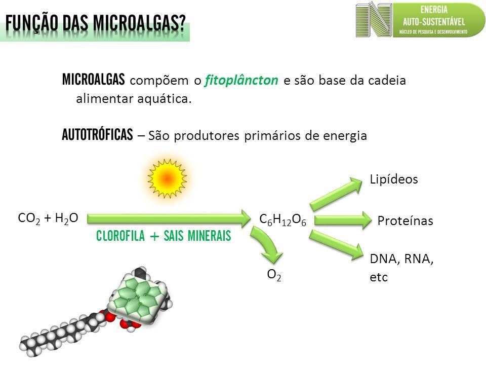 MICROALGAS compõem o fitoplâncton e são base da cadeia alimentar aquática. AUTOTRÓFICAS – São produtores primários de energia Lipídeos Proteínas DNA,