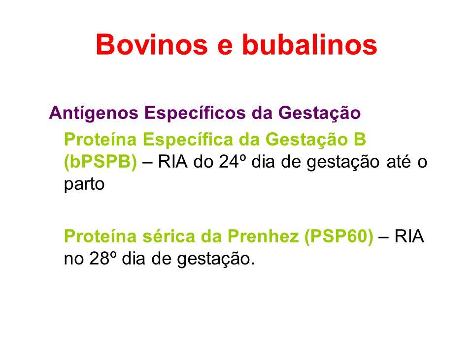 Bovinos e bubalinos Antígenos Específicos da Gestação Proteína Específica da Gestação B (bPSPB) – RIA do 24º dia de gestação até o parto Proteína séri
