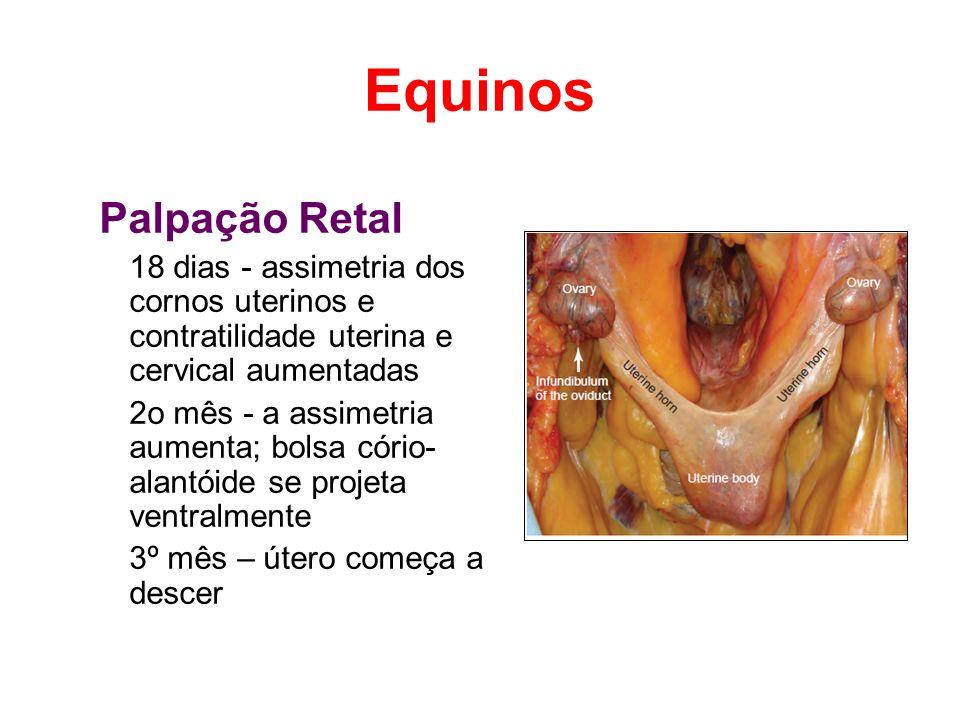 Equinos Palpação Retal 18 dias - assimetria dos cornos uterinos e contratilidade uterina e cervical aumentadas 2o mês - a assimetria aumenta; bolsa có