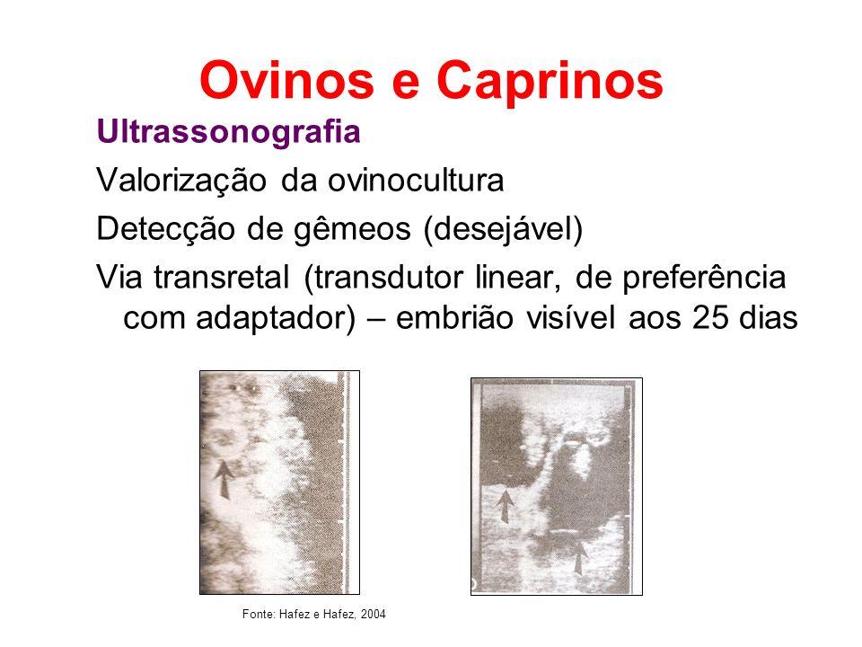 Ovinos e Caprinos Ultrassonografia Valorização da ovinocultura Detecção de gêmeos (desejável) Via transretal (transdutor linear, de preferência com ad