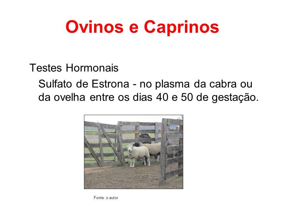 Ovinos e Caprinos Testes Hormonais Sulfato de Estrona - no plasma da cabra ou da ovelha entre os dias 40 e 50 de gestação. Fonte: o autor