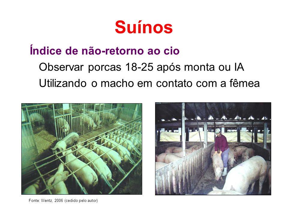 Suínos Índice de não-retorno ao cio Observar porcas 18-25 após monta ou IA Utilizando o macho em contato com a fêmea Fonte: Wentz, 2006 (cedido pelo a