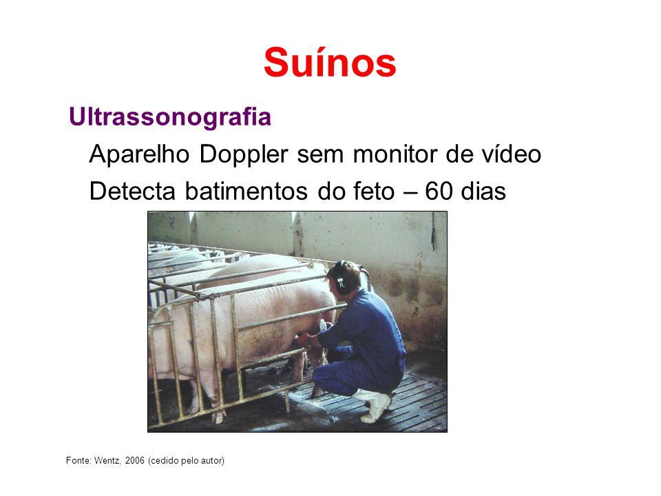Suínos Ultrassonografia Aparelho Doppler sem monitor de vídeo Detecta batimentos do feto – 60 dias Fonte: Wentz, 2006 (cedido pelo autor)